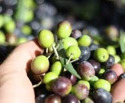 Olio italiano, olio extravergine d'oliva online