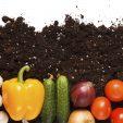 Agricoltura biologica, esiste davvero?